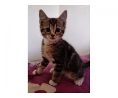Rescue kittens 8-10 weeks