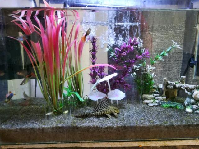 Fish Tank plus Accessories - 1/2