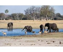 Safari Game hunting Prices contact