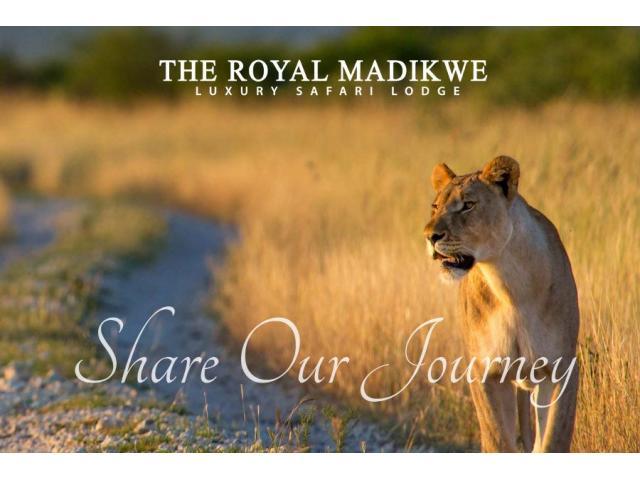 Safari Lodge South Africa - 1/4