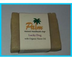 Palm Dog Shampoo Bar