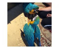 Macaws Parrots and Africa Grey,various types are available.