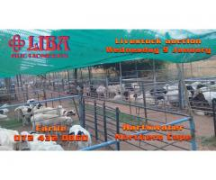 Livestock for sale Hartswater Northern Cape