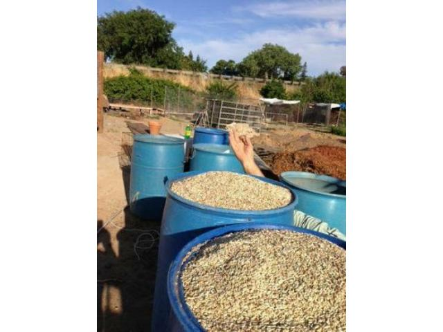 Chicken Feed For Sale Class Ads
