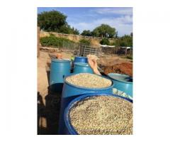 Chicken Feed For Sale