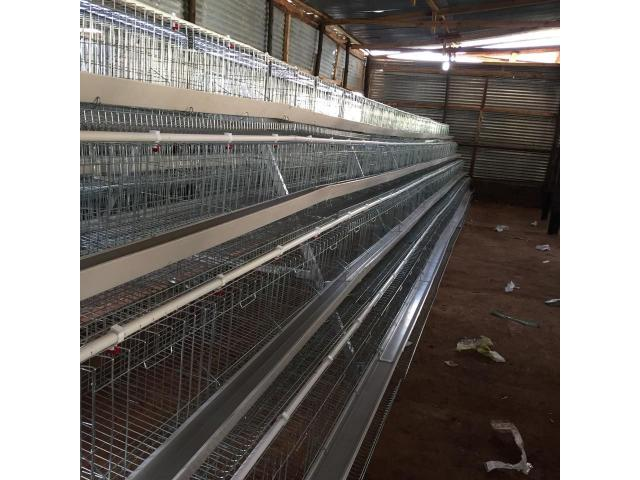 1000 Chicken Capacity Layer Cage and Layer Chickens for sale - 1/2