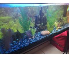 Fish Tank with Fish, Art, Accessories  and Plants