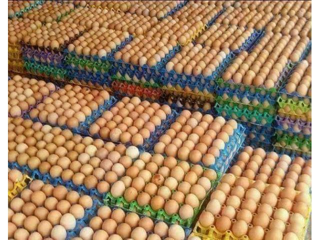 Fresh Quality Chicken Eggs for sale - 1/3