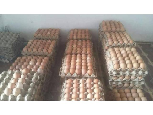 Fresh Quality Chicken Eggs for sale - 2/3