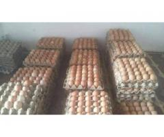 Fresh Quality Chicken Eggs for sale