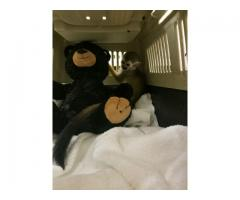 SQUIRREL MONKEYS FOR SALE HAND FED