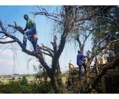 Tree Felling Masters Pretoria Gauteng