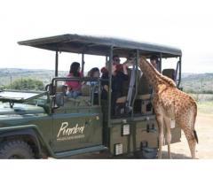 Kingsview Safaris