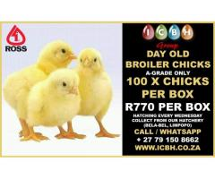 Ross 308 A-Grade Broiler Chicks