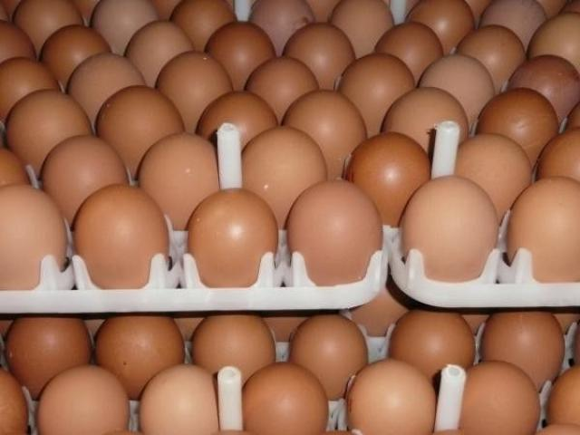Chicken Fresh Brown / White Table Eggs for Human Consumption - 1/1