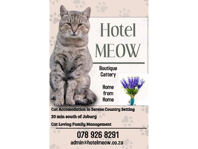 Hotel Meow - 1/4