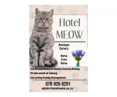 Hotel Meow