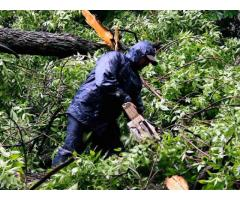 Garden Service and Tree Service
