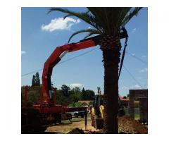 Dmike treefelling, transplanting and tree removal