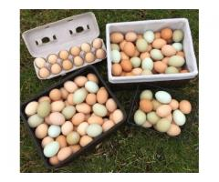 Farm Fresh Free Range Organic Eggs