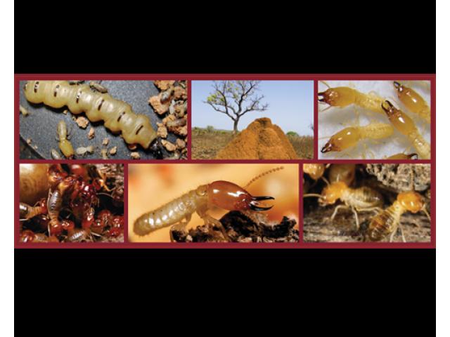 Pest Control - Pestatermite - 4/4