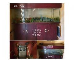 Working Fish tank with Pump and Accessories