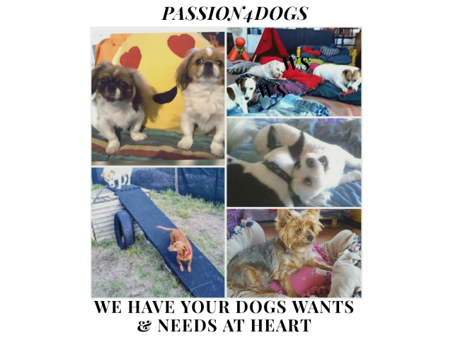 DOGGY DAYCARE & SLEEPOVER NOT KENNELS - 1/4