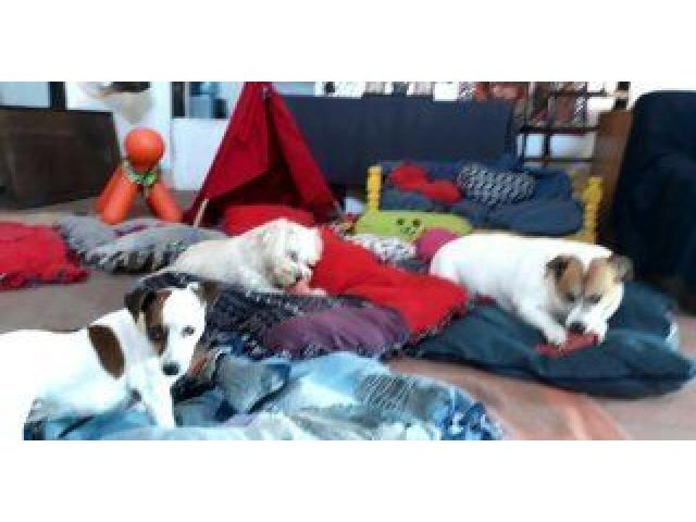 DOGGY DAYCARE & SLEEPOVER NOT KENNELS - 3/4