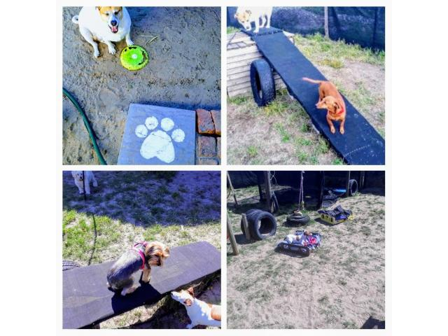 DOGGY DAYCARE & SLEEPOVER NOT KENNELS - 4/4
