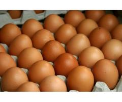 We Are Wholesaler Of Fresh Chicken Eggs From The Farms