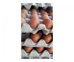 30 EXTRA LARGE EGGS ONLY R44 CALL VEFA WHOLESALERS NOW