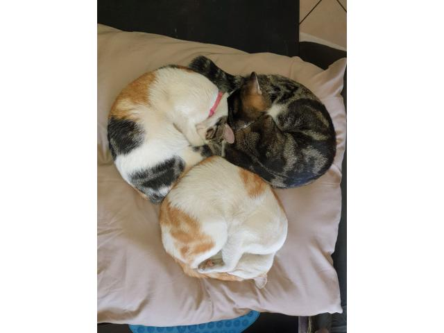 Cats needing to be re-homed - 4/4