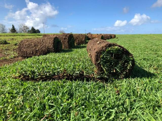 Natural Instant Lawn | Mostly Indigenous Options - 2/2
