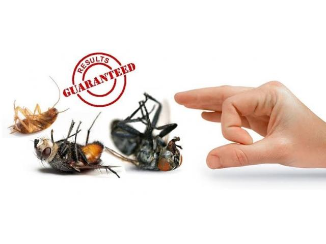 Certified Pest Control, Fumigation and Sanitizing Services available in all areas of Western Cape - 1/1