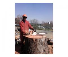 Weltevredenpark Tree Felling 0734421108