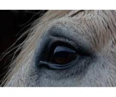 Equine Reiki Course Level I