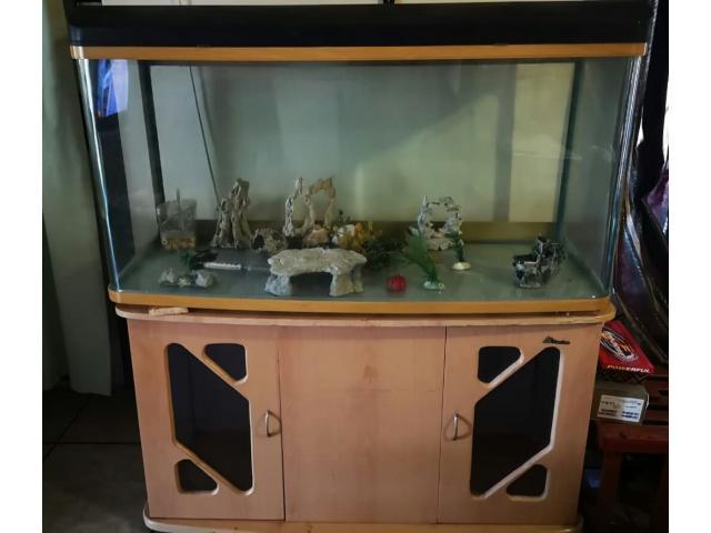 Fish Tank plus Accessories - 1/1