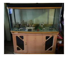 Fish Tank plus Accessories