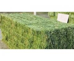 Green Alfalfa And Lucerne Hay