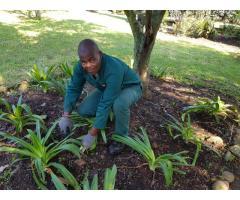 Gardener (R200/day) - Hilton, Howick, Merrivale