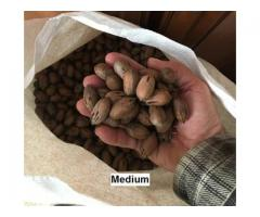 Buy Shelled Pecan Nuts at Wholesale Prices