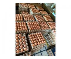 Eggs xl fresh available