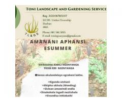 Toni Landscape and Garden Services