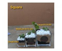 Square glass vase with succulent starting at R40.00