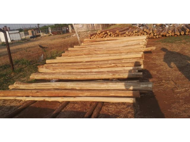 3 meters gum poles available 75/140 diameter | Gum poles - 1/4