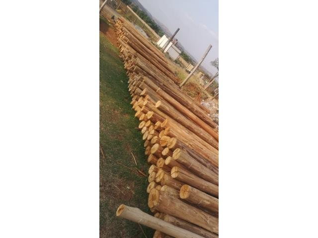 3 meters gum poles available 75/140 diameter | Gum poles - 2/4