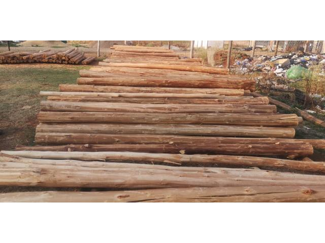 3 meters gum poles available 75/140 diameter | Gum poles - 3/4