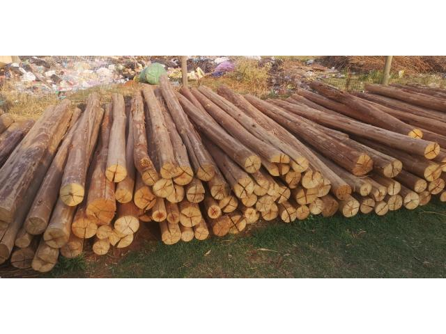 3 meters gum poles available 75/140 diameter | Gum poles - 4/4