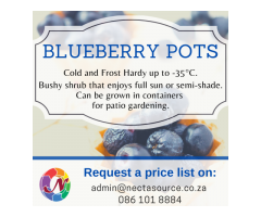 Blueberry Pots available at Nectasource (Pty) Ltd