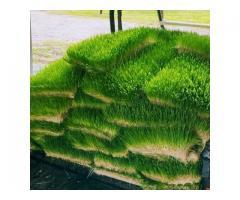 Greenfeed® Foddder unit